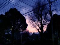 Photo_272